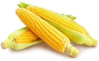 corn path isolated